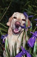 Charlie with Irises